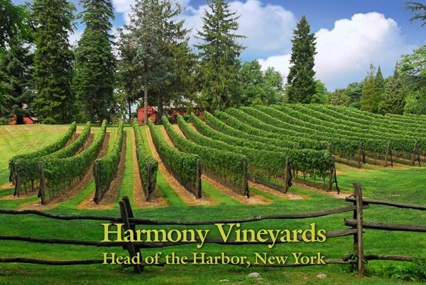 Harmony-Vineyards